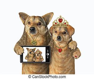 Two dogs in love take selfie