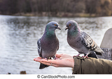 Two doves sitting on the man's hand and look at each other