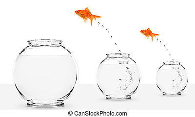 two goldfish jumping to bigger fishbowls isolated on white