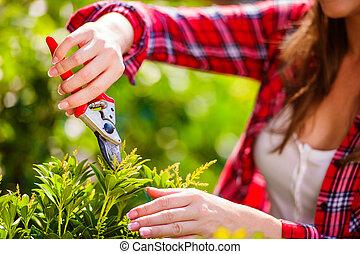 Unrecognizable gardener pruning little tree, green sunny nature