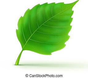 Vector illustration of cool green detailed leaf