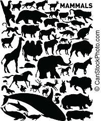 vector set of various mammals