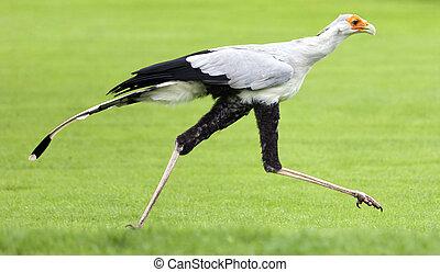 Very rare species of bird of prey