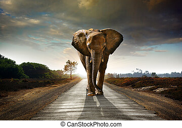 Single elephant walking in a road with the Sun from behind