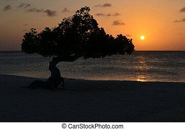 Watapana Tree Silhouetted at Sunset