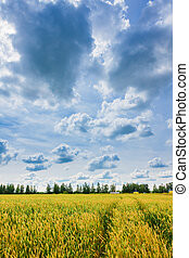 Landscape of wheat ears and sky with thunderclouds