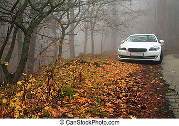 White car in the autumn forest in the fog