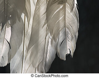 white feathers in backlight in front of dark background