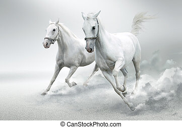 Photo of white horses in motion