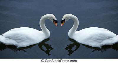White Swan, in love