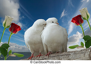 wihte doves in love