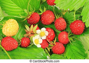 Wild strawberry