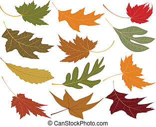 Wind blown fall leaves to add to your designs