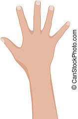Woman hand.