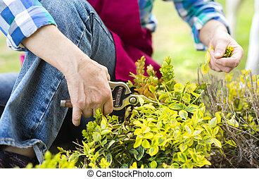 Woman pruning a bush