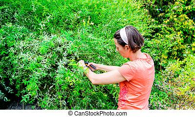 woman pruning a Japanese hakuro willow tree