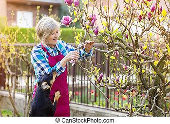 Woman pruning magnolia tree