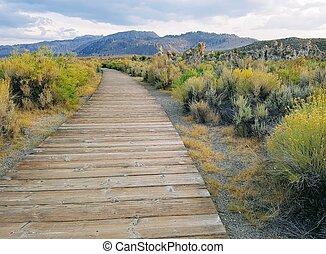 Wooden walking path among flowering bushes