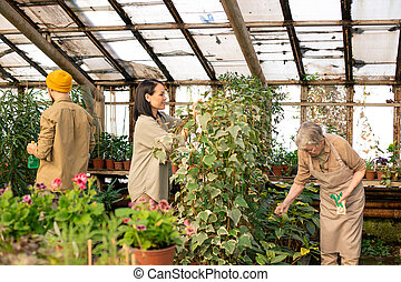 Workers of greenhouse