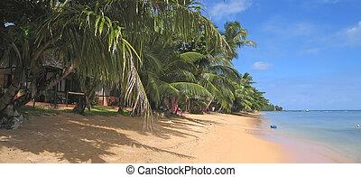 Yellow sand beach with palm trees, Nosy Boraha, Sainte, Marie island, Madagascar, Panoramique