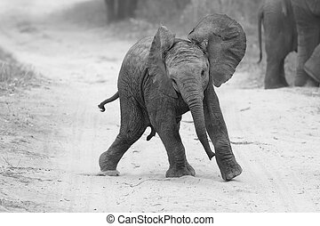 Young elephant play on road while family feed nearby in artistic conversion