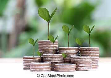 young plant grown to stack silver coin in business growth concept on wood floor.