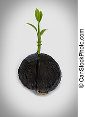 young plant on white with copyspace showing gardening agricultur