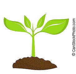 Plant seedling growing in soil. Vector illustration