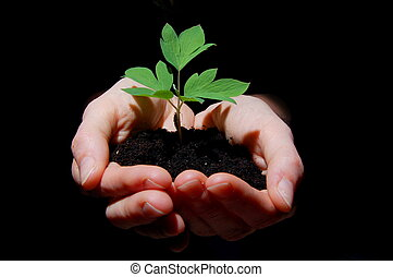 young plant with soil in hands